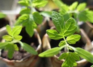 Sadzenie roślin w ogrodzie dla początkującego